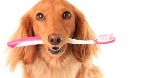 Интересные факты о зубах людей и животных